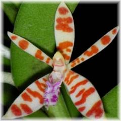 Species P-Z